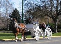 Victoria Carriage Tour Including James Bay