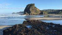 Private Tour: Piha and Waitakere Eco-Tour with Surf Lesson from Auckland