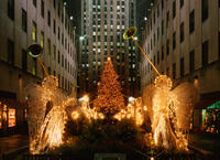 New York City Holiday Lights Tour Picture