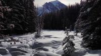Lake Louise Winter Wildlife Snowshoe Tour