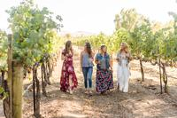 Full-Day Tri-Valley Wine Tasting and Shopping Tour from San Francisco