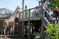 Billettes coupe-file: billettes versez le zoo de Londres - Londres -