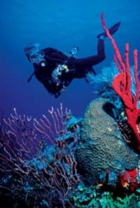 Grand Cayman Resort Dive Course