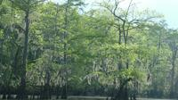 Private Tour of the Honey Island Swamp