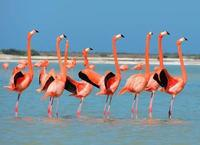 Private Tour: Flamingos, Mayan Temples, Rio Lagartos and Ek Balam