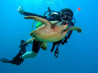 Scuba Diving for Beginners on the Leeward Coast