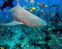 Bora Bora Snorkel, Shark and Ray Feeding Excursion