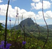 Moorea Three Coconuts Trail Guided Hike