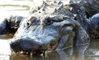 Miami Day Trip and Florida Everglades Airboat Ride