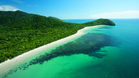 Cape Tribulation, Mossman Gorge and Daintree Rainforest Day Trip from Cairns or Port Douglas Private Car Transfers