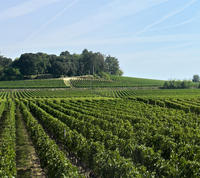 Saint-Emilion Day Trip from Bordeaux: Chteau Wine Tastings and Lunch