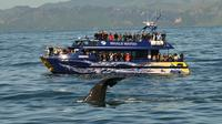 Full-Day Kaikoura Tour from Christchurch, Christchurch Tours and Sightseeing