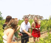 Wine Tasting and Pairing Afternoon Tour