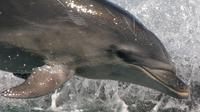 Wildlife and Dolphin Eco-Tour Cruise from Picton, Picton Natural Activities & Attractions