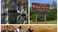 5 hour Everglades Tour with Miccosukee Airboat and Big Cypress National Preserve
