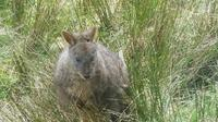 Leven Canyon Day Trip Including Wings Wildlife Park or Gunns Plains Caves from Devonport, Ulverstone or Burnie