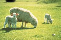 Akaroa Shore Excursion: Banks Peninsula, Christchurch City Tour and Sheep Farm Tour, Christchurch Tours and Sightseeing