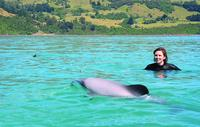 Akaroa Swim with Dolphins Tour from Christchurch, Akaroa Water Activities