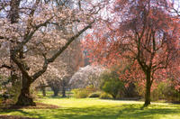 Christchurch Half-Day Gardens Tour, Christchurch Tours and Sightseeing