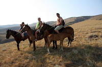Christchurch Horse Trekking, Christchurch Horse Riding & Horse Trekking