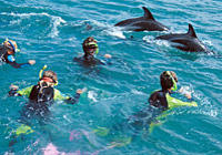 Kaikoura Swim with Dolphins Tour from Christchurch, Christchurch Water Activities