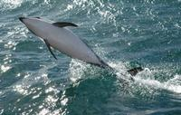 Kaikoura Whale and Dolphin Overnight Tour from Christchurch, Christchurch Water Activities
