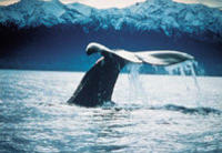 Kaikoura Whale Watch Tour from Christchurch including Coastal Pacific Train Journey, Christchurch Water Activities