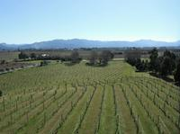 Picton Shore Excursion: Marlborough Wine Region Small-Group Tour, Picton Tours and Sightseeing
