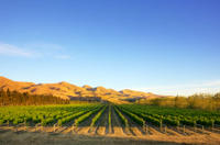 Waipara Wine Trail Tour from Christchurch