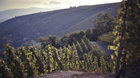 Private Tour: Wine Day Tour in the Rhône Valley from Lyon