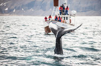 Picture of Whale Watching and Blue Lagoon Direct and Keflavik Airport