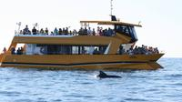 Dolphins and the Algarve Coastline Boat Trip from Albufeira
