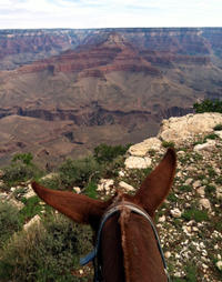Viator Exclusive: Grand Canyon South Rim Overnight Trip with Mule Ride from Flagstaff