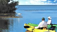 Key West Backcountry Kayak and Paddleboard Eco Tours Photo