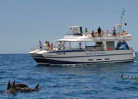 Dolphin and Whale Cruise