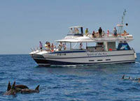 Spirit of the Sea - Dolphin and Whale Cruise