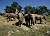San Diego Safari Park Transportation and Admission