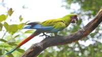 Birdwatching in Cerro Blanco from Guayaquil image 1