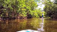 Blackwater River One Way Paddle Board Tour Photo
