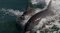 Dolphin Watching Tour near Marco Island