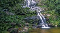 Private Tijuca Forest and Christ the Redeemer Tour image 1