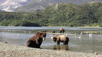 Helicopter Bear Viewing Safari to the Alaska Peninsula