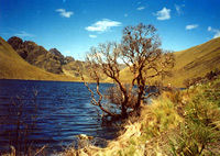 Full Day Tour to National Park of Cajas with Lunch