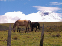National Park of Cotopaxi and Hacienda from Quito