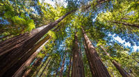 Bike the Golden Gate Bridge and Shuttle Tour to Muir Woods