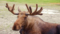 Glaciers and Wildlife - Super Scenic Guided Day Tour from Anchorage