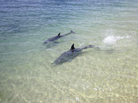 3-Day Monkey Mia Dolphins, Pinnacles Desert and Kalbarri National Park Tour from Perth image 1