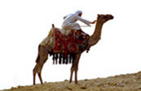 Camel Safari with Optional Bedouin Dinner