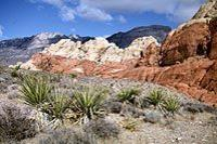 Red Rock Canyon Tour