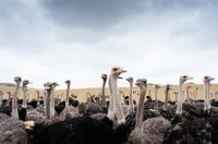 Curacao Shore Excursion: Ostrich Farm and Hato Caves Adventure
